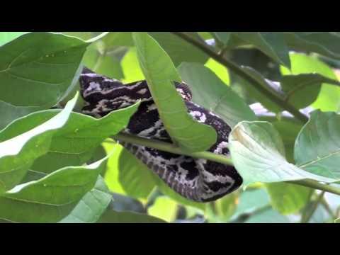 Wildlife, St. Vincent, Caribbean