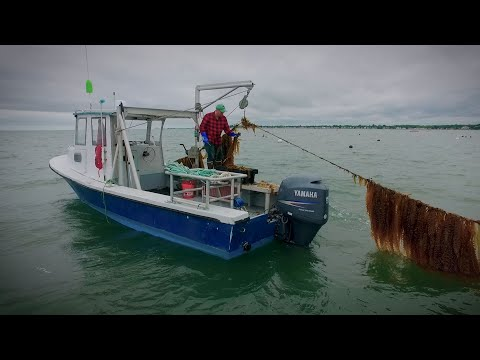 The Future Of Ocean Farming: 3D Ocean Farming