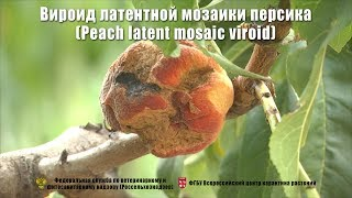 Вироид латентной мозаики персика (Peach latent mosaic viroid)