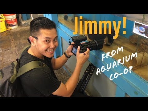 Fish Store Tour With Swhiskey! (Coral Fish Hawaii)