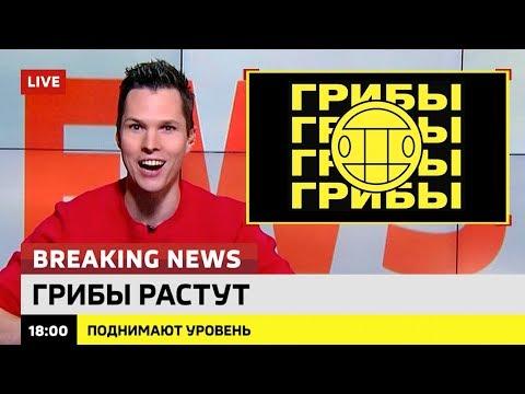 Новый клип от группы 'Грибы'? Ломаные новости #5. Итоги недели от 13.10.17