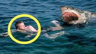 Fitness Model Attacked By Megalodon Shark Of Australian Beach. Real or Fake?
