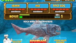 Bölüm 1 yeni skor köpek balığı oyunu