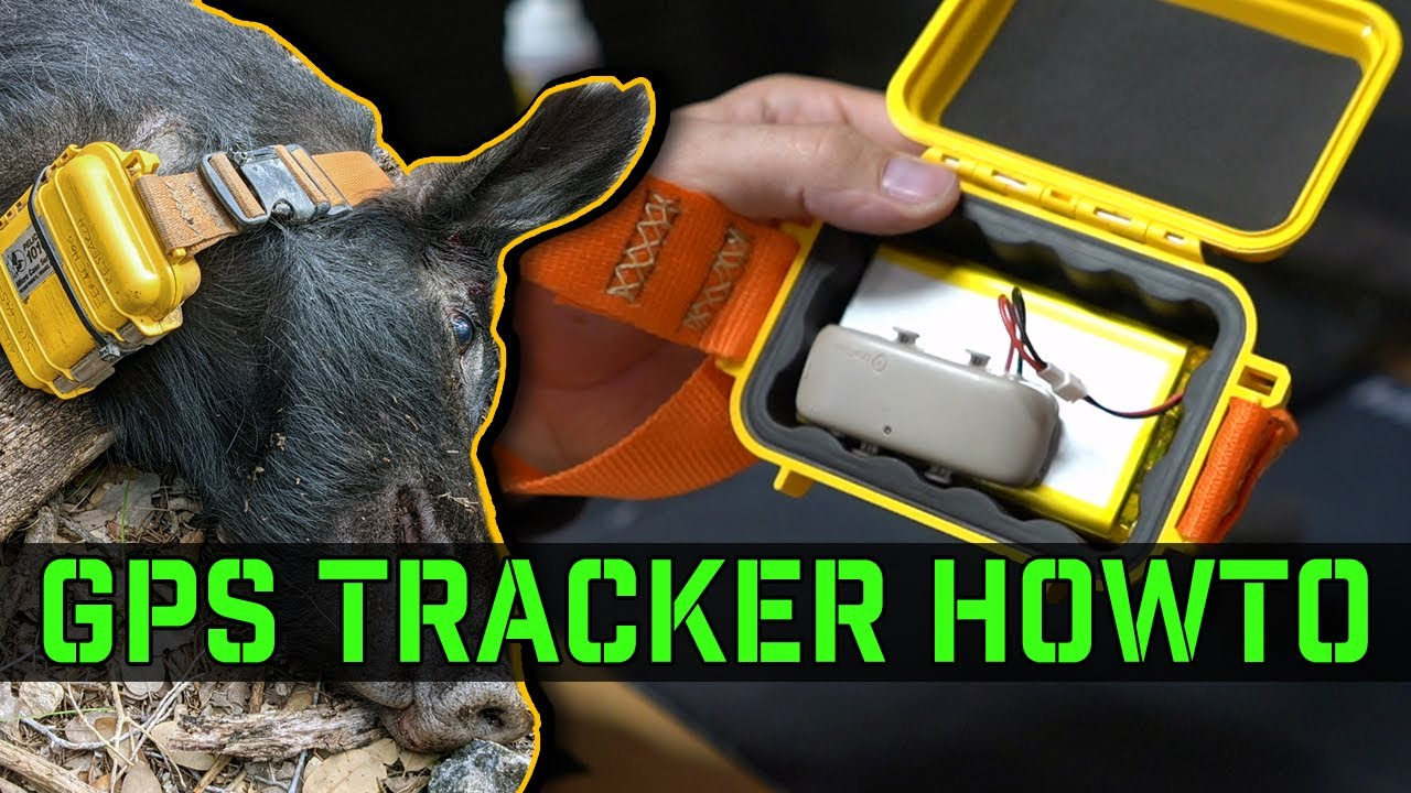 How to build a GPS Tracker for Feral Hogs for under $100