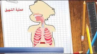 عملية التنفس عند الإنسان