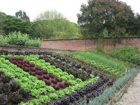 мой сад и огород своими руками дизайн участка 7