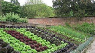 Красивый дизайн огорода на даче