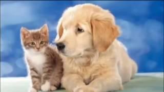 Самая БОЛЬШАЯ собака в мире!!!