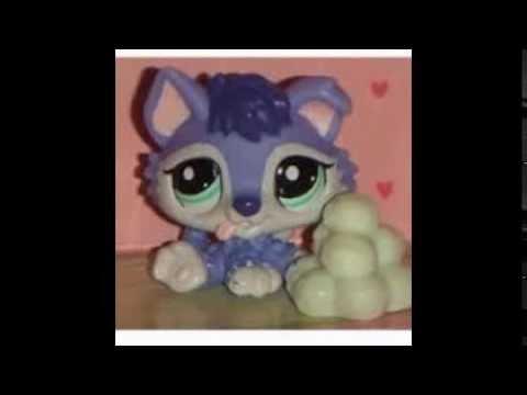 Un autre mini diapa petshop mes de b b chaton et chien - Petshop chaton ...