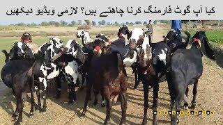 128   شوقین بھائیو اگر آپ بکریاں رکھنا چائیتے ہیں     HOW TO START GOAT FARMING ?