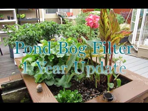 Pond Bog Filtration -1 year Update
