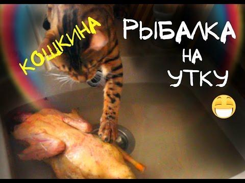 Царская охота на кошек! kot de azur