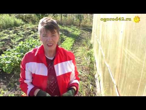 Вопрос: Когда убирать чеснок посаженный под зиму на Урале?