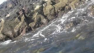 Video La isla del cangrejo download MP3, 3GP, MP4, WEBM, AVI, FLV November 2017