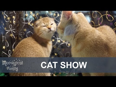 CAT SHOW in 2 minutes