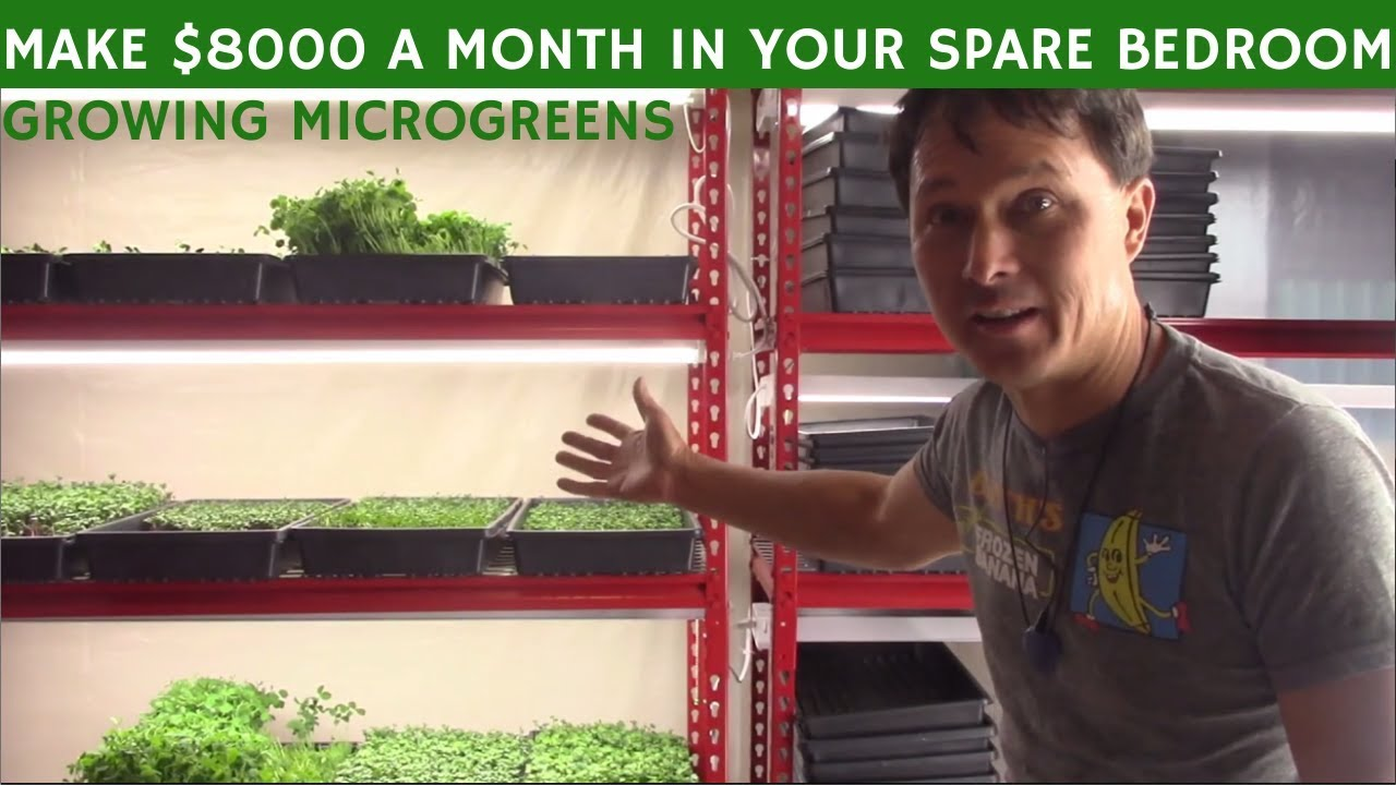 Make $8000+ A Month Growing Microgreens in a Spare Bedroom at Home