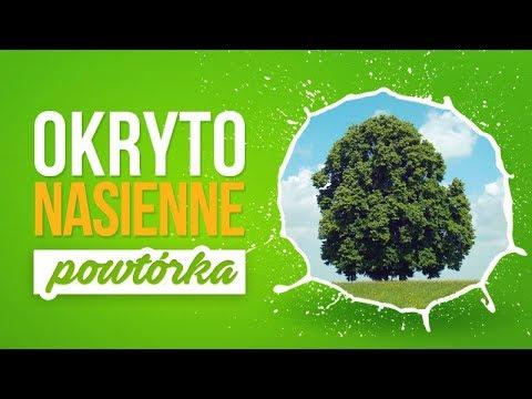 Okrytonasienne, cykl rozwojowy - Botanika powtórka z biologii.