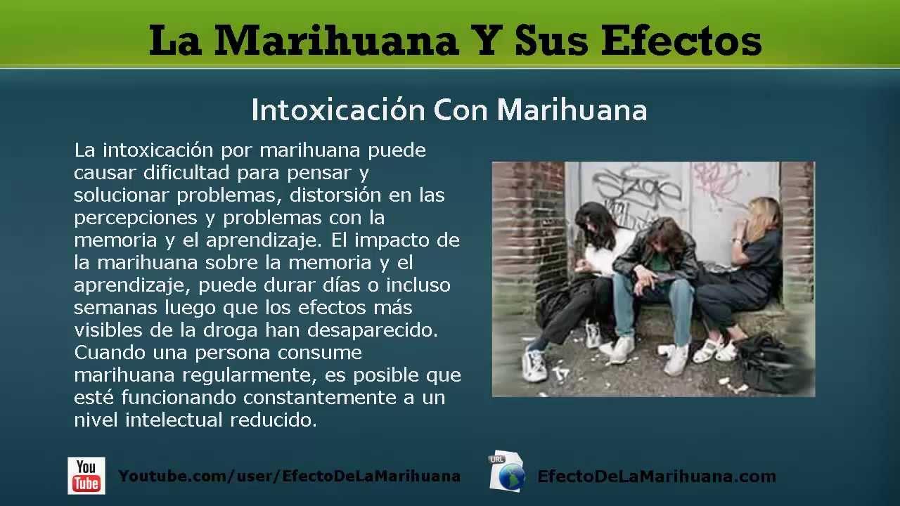 La Marihuana Y Sus Efectos: Cuáles Son Los Verdaderos Efectos De ...
