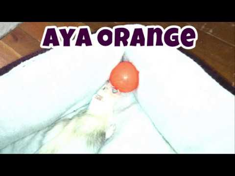 Aya Orange: Our Other Adorable Pets 3 - VOL. 42