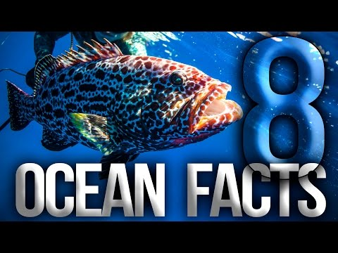 8-ocean-facts-you-didn't-know