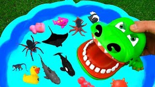 Learn Wild Animals Farm Animals Zoo Animals Dinosaurs For Kids in Pool Learn Colors for Kids