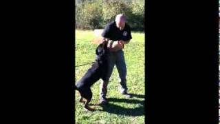 Custom Canine Unlimited | Personal Protection Dog | Personal Protection Dog Training