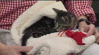 Pet Questions: Cat catching mice now has sore on his lip