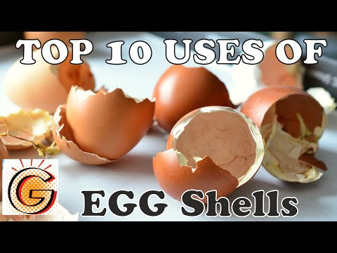 Top 10 Uses of Eggshells - video