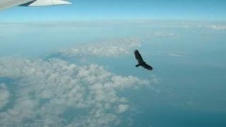 Thunderbird Sightings! Do These Mythical Creatures Exist?