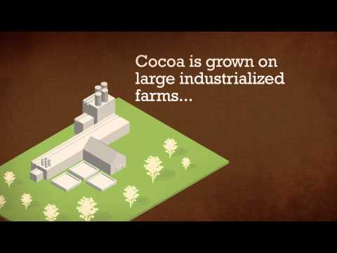 10 Things you didn't know about cocoa - English