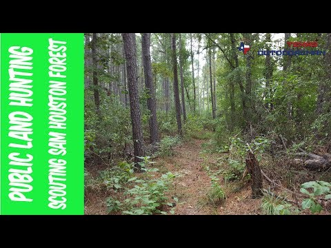 Scouting Public Land In Sam Houston Forest | The Texas Outdoorsman