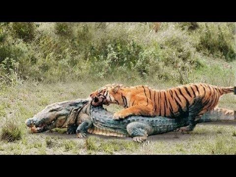Вопрос: Где обитают уссурийские тигры?