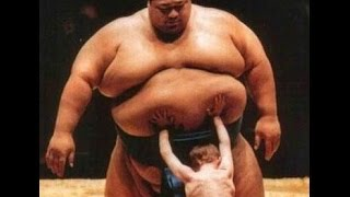 Размер имеет значение Самый маленкий борец сумо в мире  Смотрим!