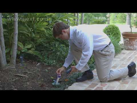 Louisiana Termite Control | J&J Exterminating
