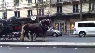Défilé de chevaux et d'attelages à Paris 24/11/2013