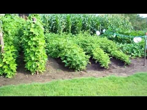 Making a Heirloom Organic Vegetable Garden Start To Finish 2011