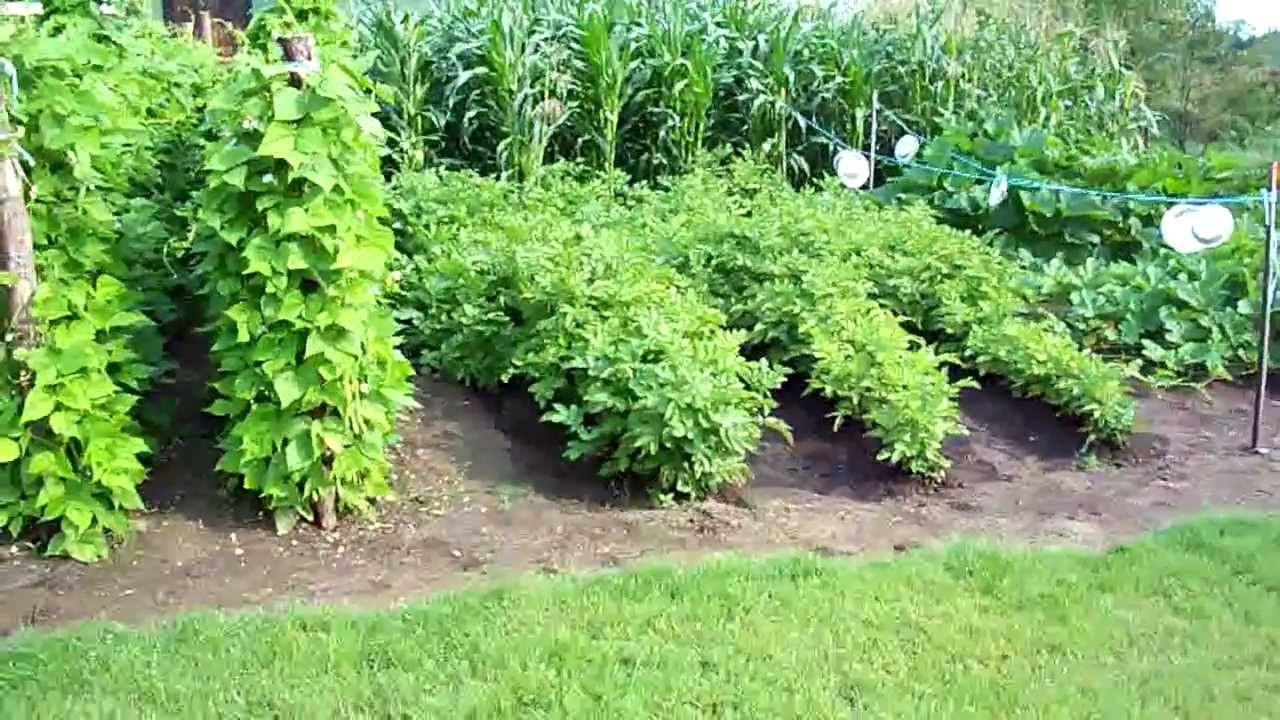 making heirloom organic vegetable