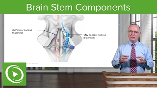 Brain Stem Components: Midbrain, Pons & Medulla Oblangata – Brain & Nervous System | Lecturio