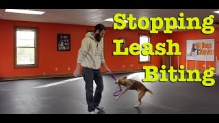 How Do I Stop My Dog From Biting The Leash?