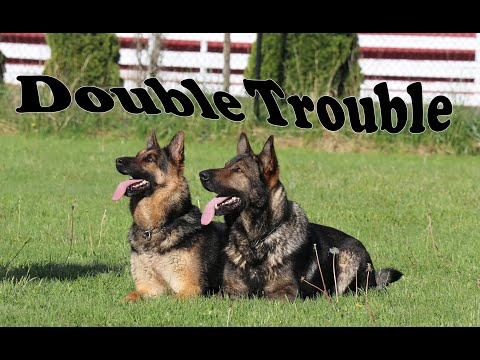 Rocco (German Shepherd) Dog Training Video from YouTube · Duration:  4 minutes