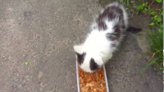Kitten lives in a pipe19