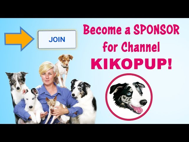 NEW! Sponsorship LEVELS for Dog Training by Kikopup!