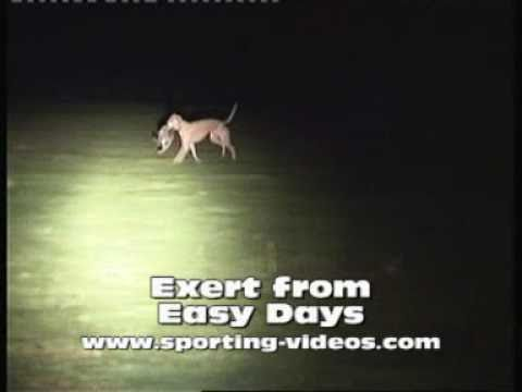 lurchers lamping, easy days 1 - YouTube