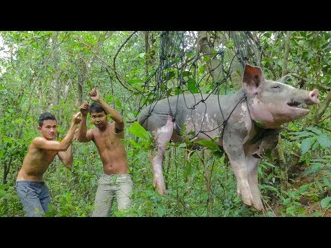 Primitive Technology: Build Pig Trap and Roasted Big Pig Eating Delicious
