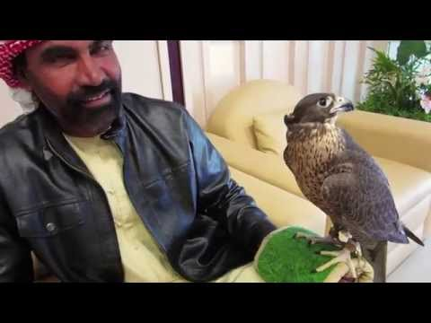 Abu Dhabi Falcon Encounter