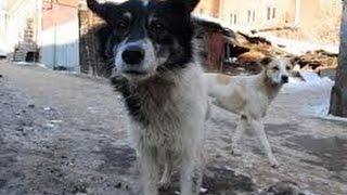 Отражение. Бездомные собаки