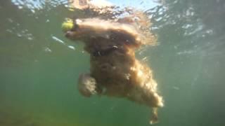 Snoopy Onderwater Hond