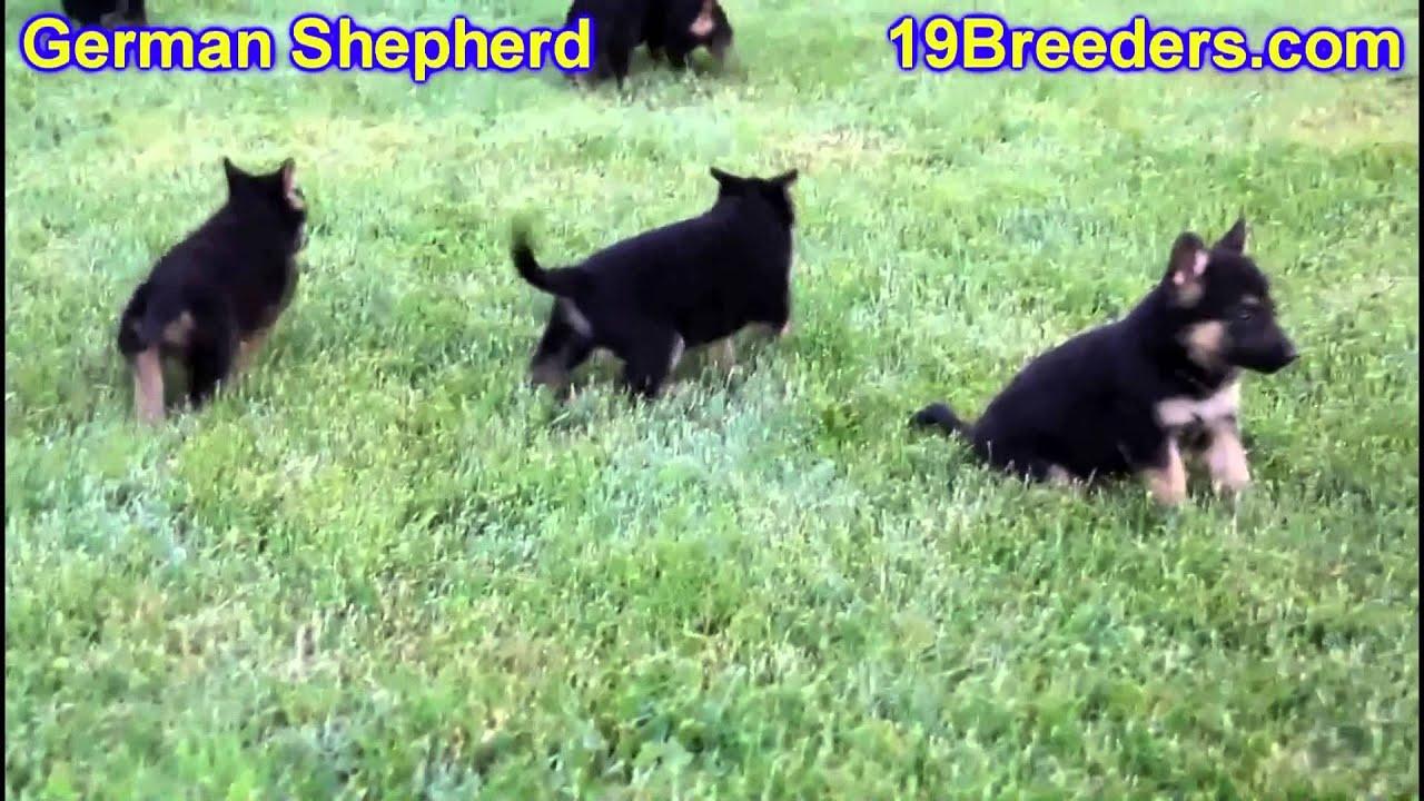 German Shepherd, Puppies, For, Sale, In, Boise City, Idaho ...