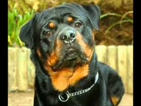 Top 10 most loyal dogs