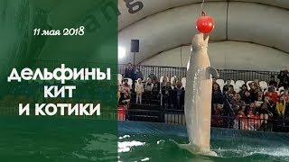 Мы посмотрели шоу ДЕЛЬФИНОВ, у Насти новая КЕПКА с блестками